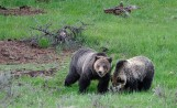 Hunters Need To Be Bear Aware