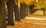 City's Urban Forestry Division to Replace 79 Ailing Street Trees